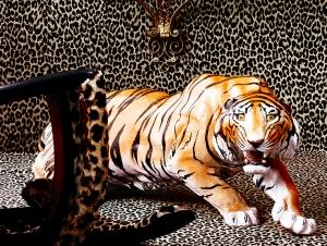 leopardo-alta-res-302